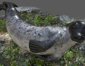 Common Seal Rigged 3D model