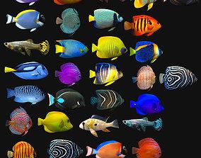 Tropical Fish Megapack 3D asset