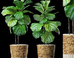 PLANTS 178 3D model