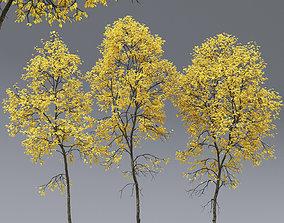 Ash-tree 05 06 autumn H21 22m 3D