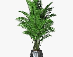 palm 10 3D