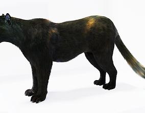 VR / AR ready Realistic Fur Black Panther3D Model NO RIG