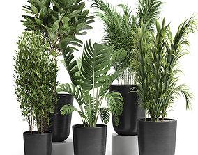 3D model Indoor plant 24
