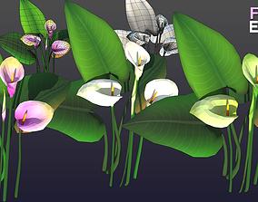 3D asset Flower Ethiopi