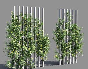 Hibbertia scandens 2 3D model