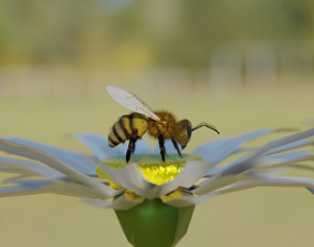 Bee photorealistic 3D model low-poly