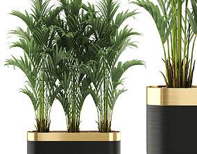 Plants collection 482 3D