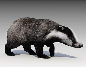 3D asset Badger