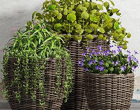 Decorative plant set-45 3D