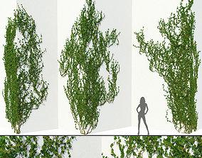 3D model Ivy Wall Corner 02