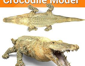 low-poly 3D african crocodile alligator