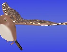 3D model Brown sparrow hawk