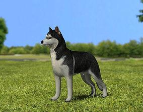 3D model Siberian Husky