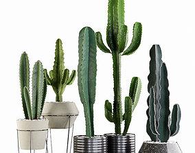 Plants collection 03 Cactus set 3D model