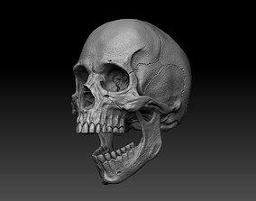 3D Skull Human cranium