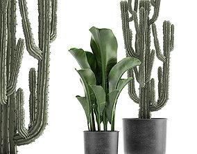 3D Decorative plants in flowerpots 831