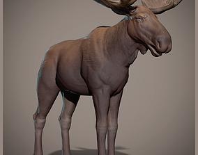 Moose 3D asset low-poly