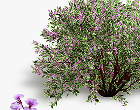 3D model Bush Weigela