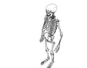 Skeleton 3D asset