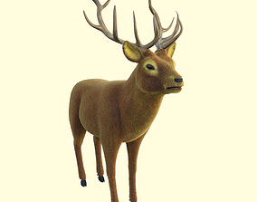 odocoileus Red Deer 3D model