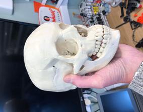 3D printable model Human skull sculptures
