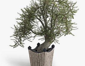 3D model Olea europaea spring