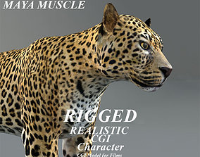 Leopard Rigged Maya muscle 3D