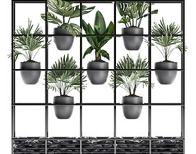 Collection Exotic plants 363 3D model