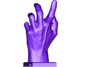 3D print model HAND ANATOMY
