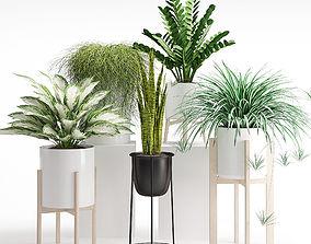 Houseplant 23 3D model