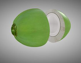 palm 3D model Coconut