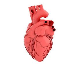 human-heart human heart 3D model