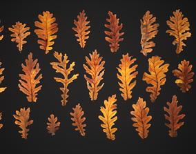3D asset Dead Oak Leaves 4K Scanned