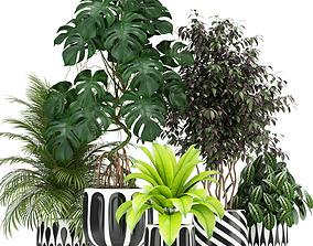 3D Plants collection 179