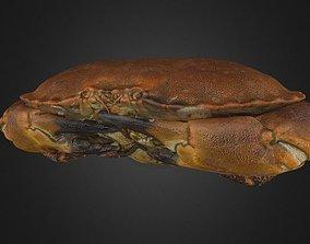 Crab - crustacean 3D sea
