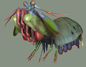 Mantis Shrimp 3D asset