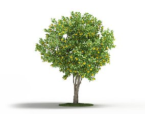 3D Mature Naval Orange Tree