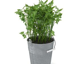 Parsley parsley 3D model