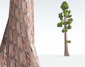 low-poly EVERYPlant Coastal Redwood Cartoon 01 --12