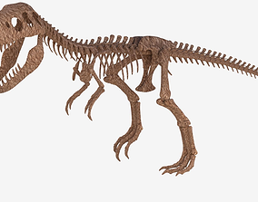 Tyrannosaurus Rex Skeleton 3D