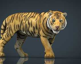 3D model game-ready Tiger
