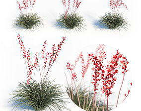 Hesperaloe Parviflora - Red Yucca 3D