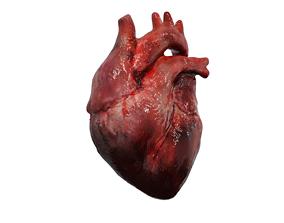 3D model Human heart beating