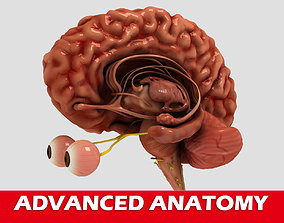 3D High quality human brain