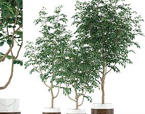 3D Plants collection 205