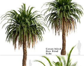 Set of Canary Island Date Palm or Phoenix 3D model 1