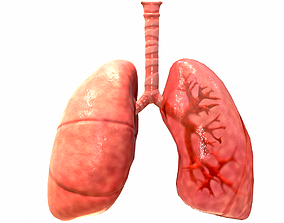 Respiratory System 3D model game-ready bronchi