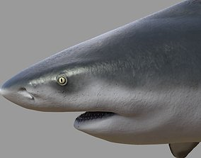 3D model Bull shark rigged and animated for Cinema 4d