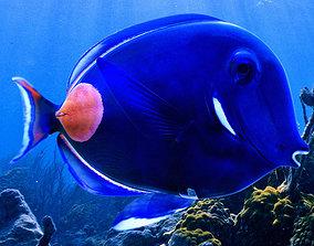 Achilles Tang Tropical Fish 3D model
