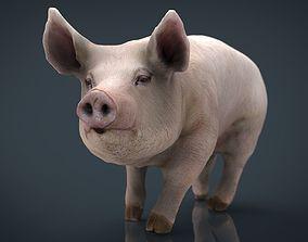 Realistic Pig 3D model